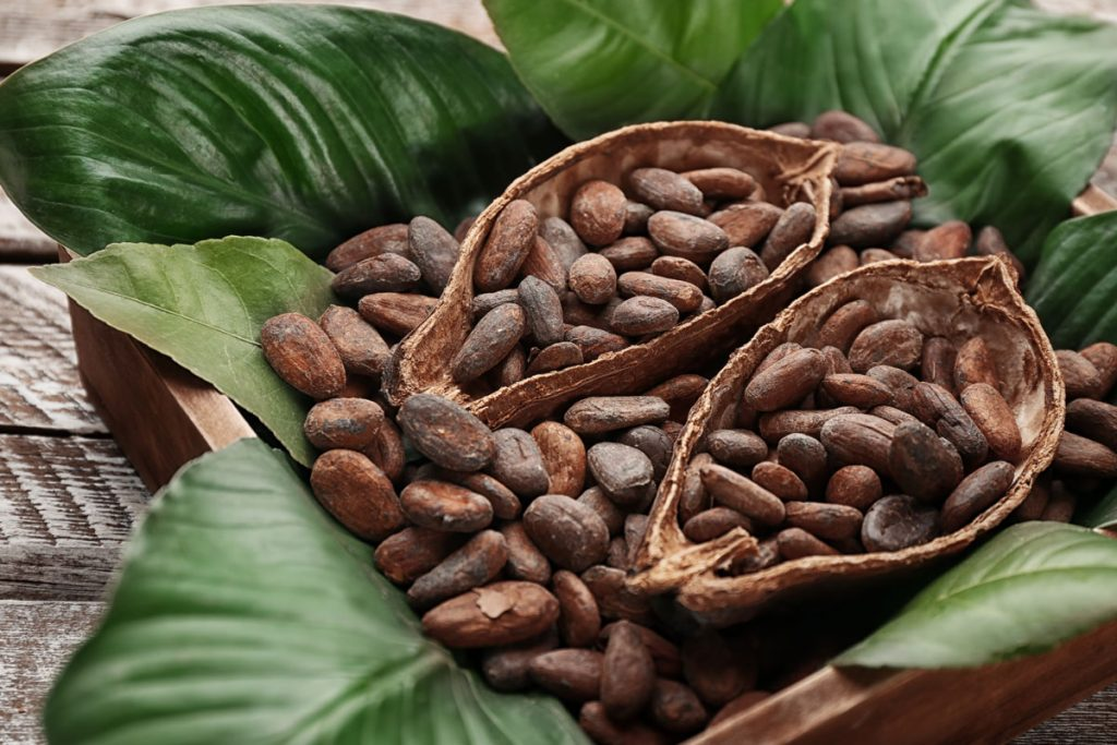 cocoa beans from sustainable farming